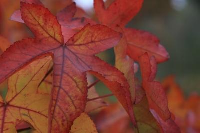 Képek levelekből