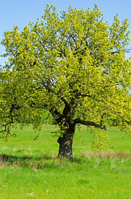 tree-164557_640