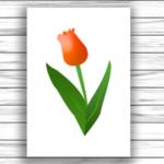 Tavaszi virágok játékcsomag
