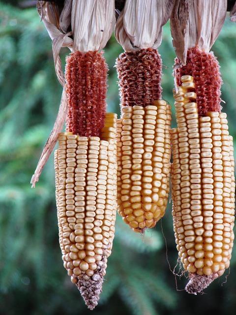 Játékok a kukoricával