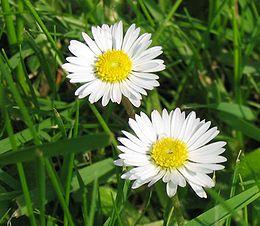 Virágos feladatlapok – továbbgondolva