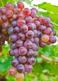Találós kérdések őszi gyümölcsökről