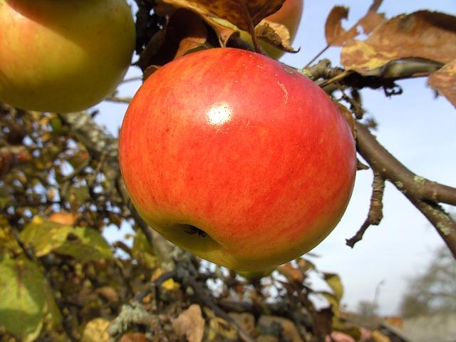 almás mesék óvodásoknak