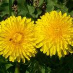 Versek tavaszi virágokról