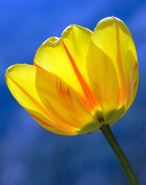 versek tavaszi virágokról óvodás gyerekeknek