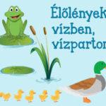 Vízi világ 2 – nyomtatható játékok vízi élőlényekről