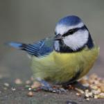 Ötletek madarak és fák napjára ovisoknak