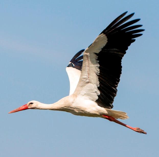 Ismerd meg a gólyákat! Ötletek ovisoknak