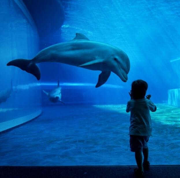 Versek tengerről, tengeri állatokról